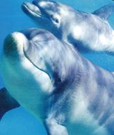 Bunbury Dolphins Video | Bottlenose Dolphins Bunbury